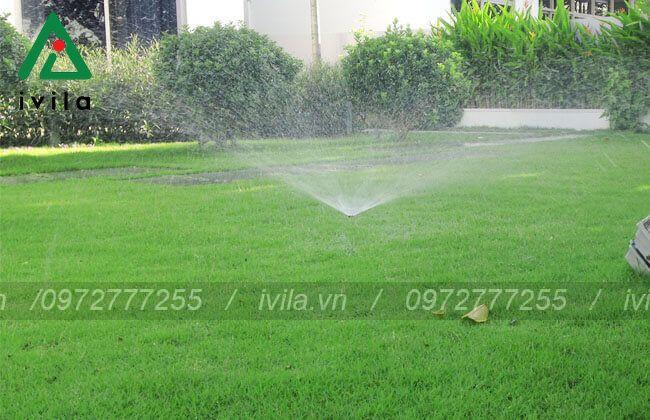 Tưới phun mưa là gì? Các phương pháp tưới phun mưa