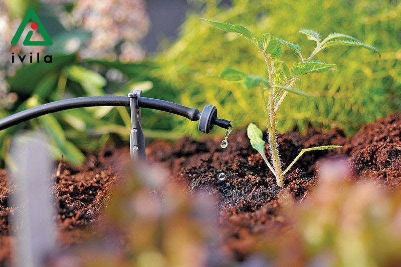 Thiết kế hệ thống tưới nhỏ giọt cho cây ăn quả