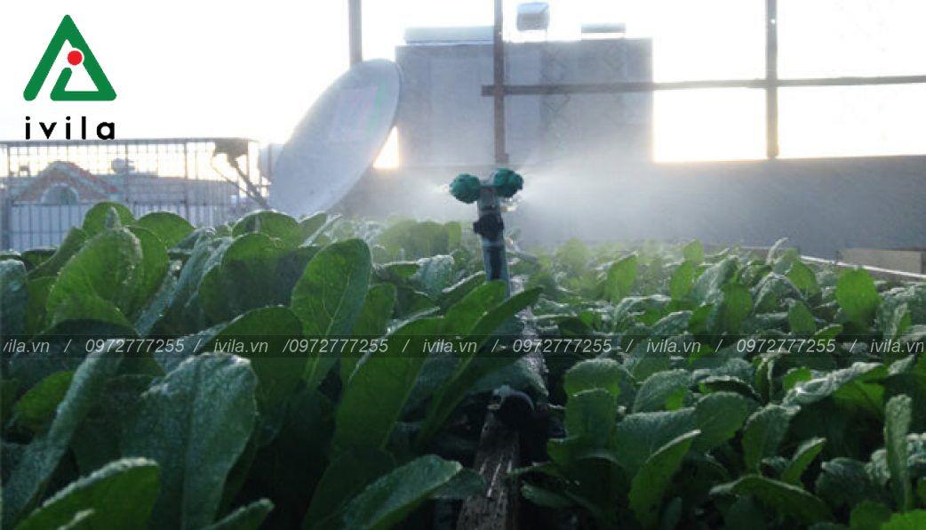 Sử dụng hệ thống tưới cho vườn rau sân thượng nên hay không ?
