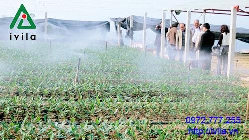 Tầm quan trọng của hệ thống tưới phun sương.