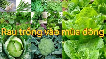 Những loại rau củ dễ trồng tại nhà vào mùa đông