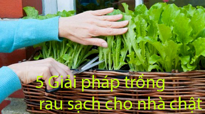 5 giải pháp trồng rau sạch cho nhà chật