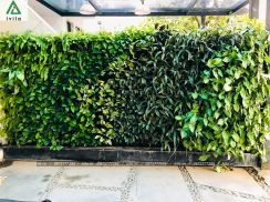 Vườn tường cô Thành Sinputra
