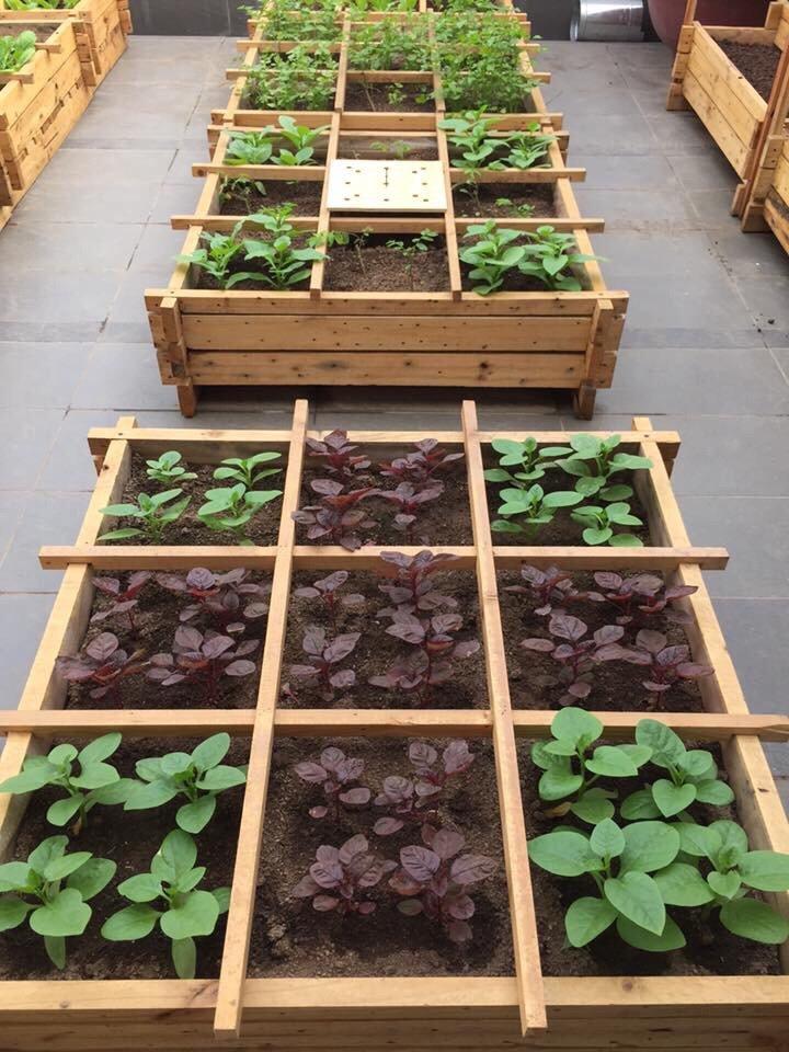 Vườn rau chậu gỗ