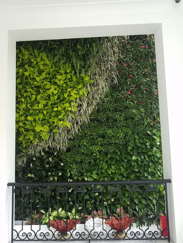 Vườn tường Tô Ngọc Vân
