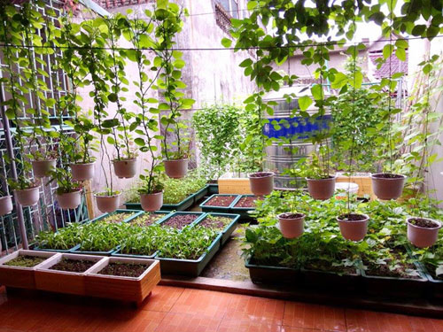 Cách trồng rau trên sân thượng xanh mướt cực đơn giản
