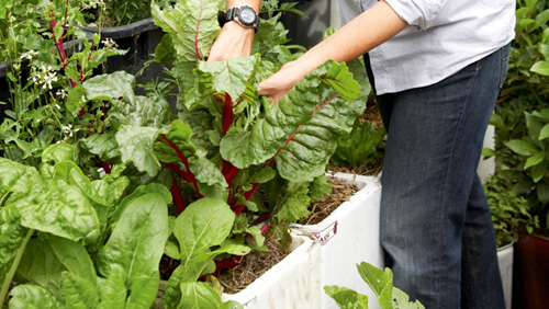 Cách trồng rau tại nhà đơn giản và không tốn kém