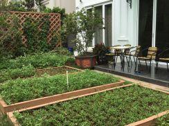 Vườn rau sạch anh Phương Biệt thự Splendora