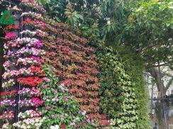 Vườn tường Aqua Minh Long