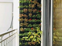 Tổng hợp các mẫu vườn đứng, vườn tường ban công đẹp IVILA Garden