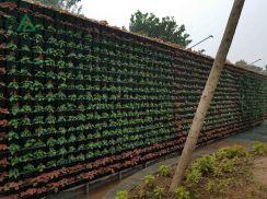 Vườn tường Cổ Bi